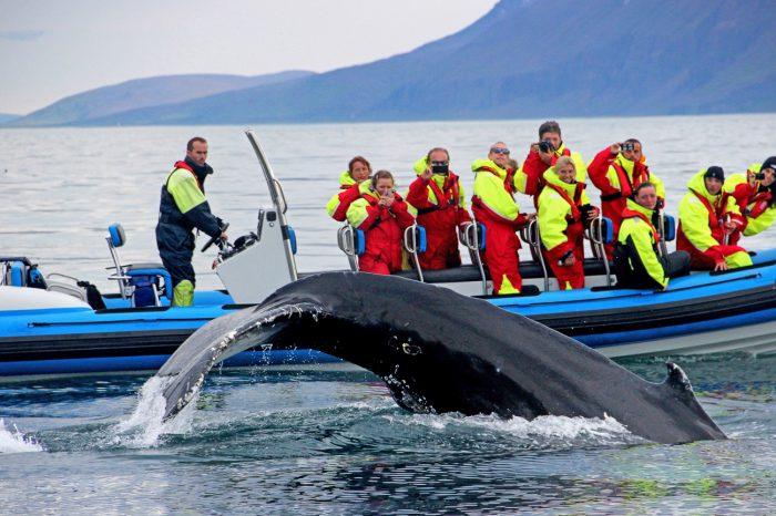 Island kør-selv 11 dage