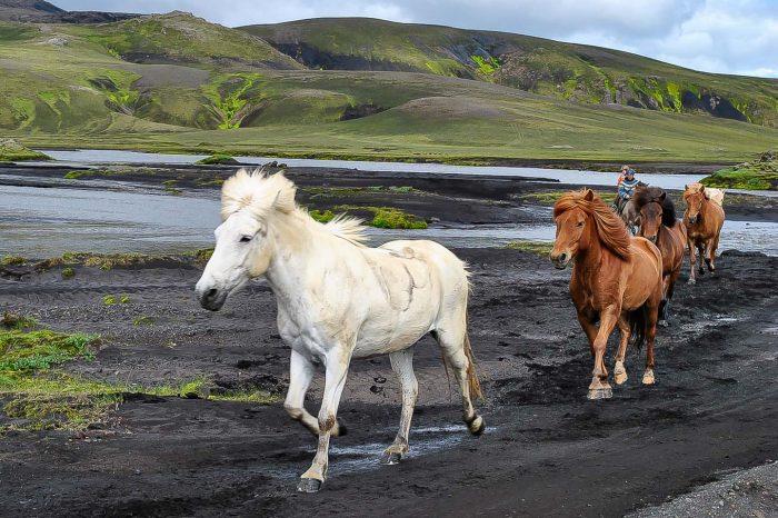 Fjallabak og Landmannalaugar