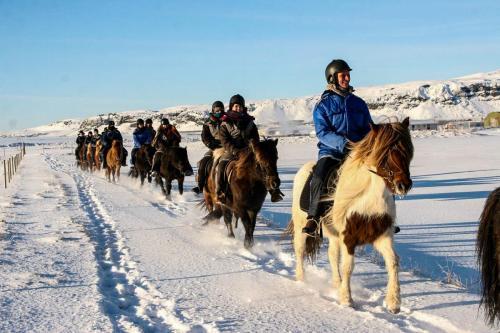Det er skønt at ride på en islænder om vinteren.