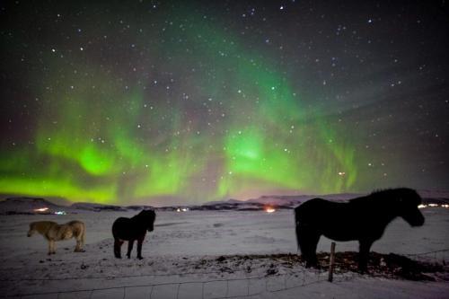 Nordlys og islændere